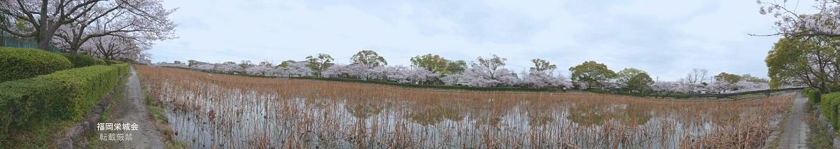 南濠の桜 全景1.jpg