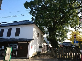 中村家住宅と大楠.jpg