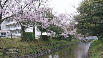 佐賀工業高校の東を流れる多布施川.jpg