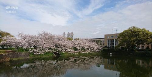 佐賀県庁 お堀に桜と大楠.jpg