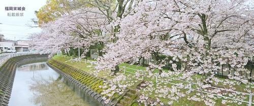 佐賀藩多布施公儀反射炉跡碑 説明碑 と桜.jpg