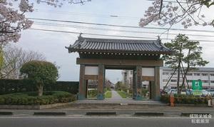 南濠桜並木より赤松小学校正門.jpg