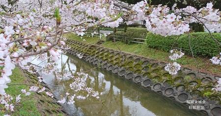 多布施橋の桜.jpg