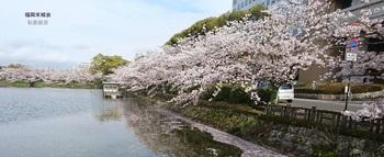 県庁 北濠の桜 2.jpg