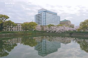県庁 北濠の桜と楠.jpg