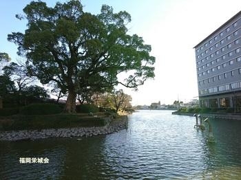 西堀端,大楠.jpg