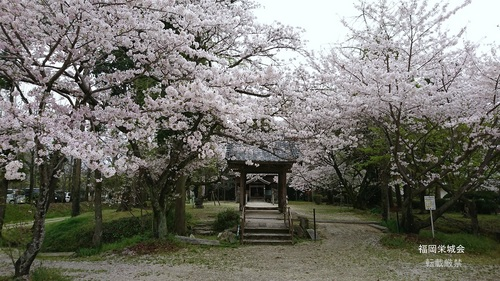 長瀬天満宮の桜.jpg