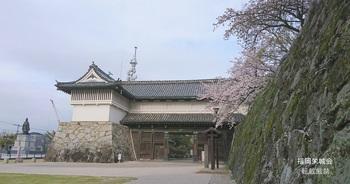 鯱の門、石垣に桜1.jpg