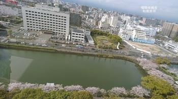 展望階より北濠の桜.jpg