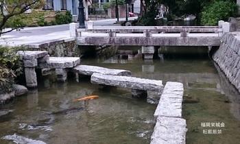 松原川 鯉.jpg
