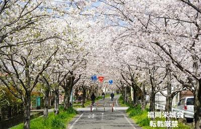 桜並木に自転車 2.jpg