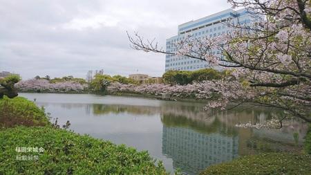 県庁 北濠の桜.jpg