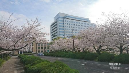 県庁に桜.jpg