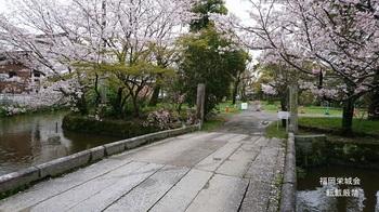 静かな花見スポット.jpg